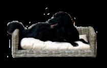 SILVIO DESIGN | Hundesofa Bonny