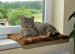 SILVIO DESIGN | Fensterliege honig | Plüsch,braun 1