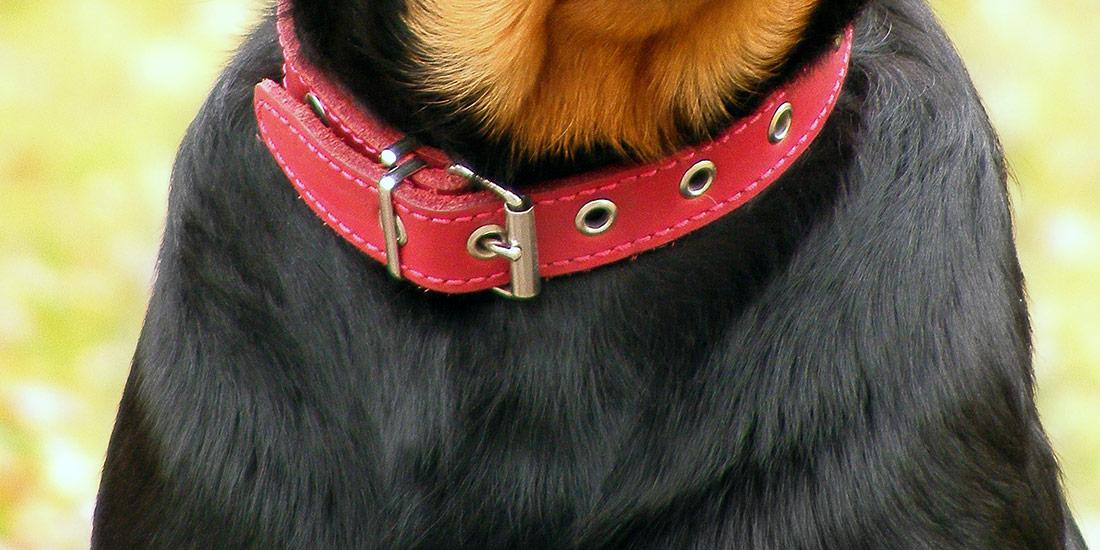 Rotes Lederhalsband für Hunde