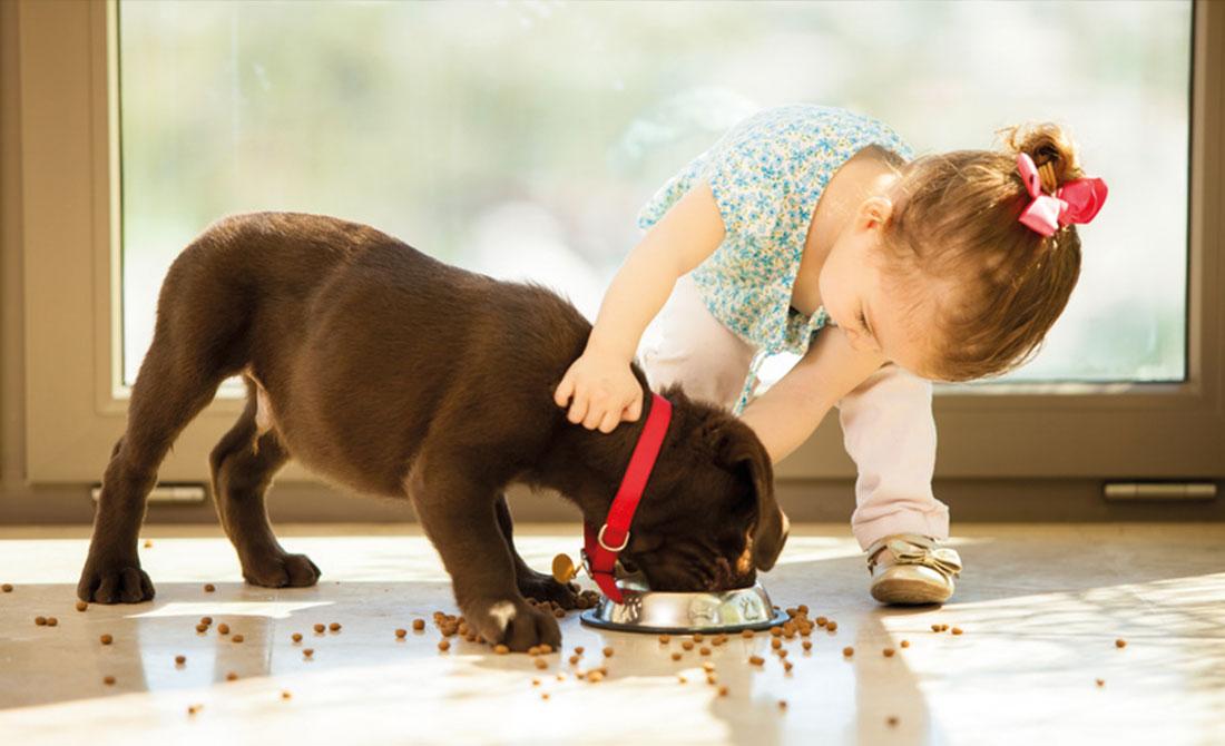 Wann Und Wie Den Hund Füttern Hundelandde