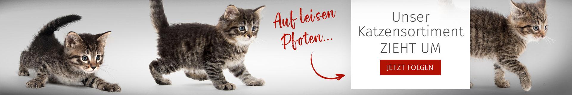 Auf leisen Pfoten - Das Katzen-Sortiment zieht um
