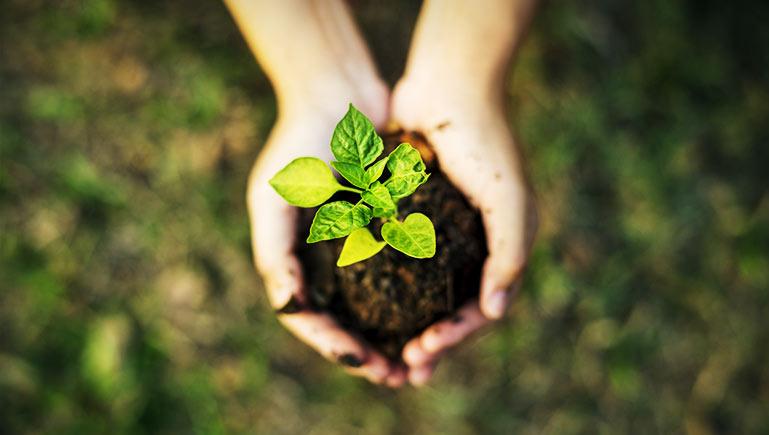 BIO - Gut für die Umwelt